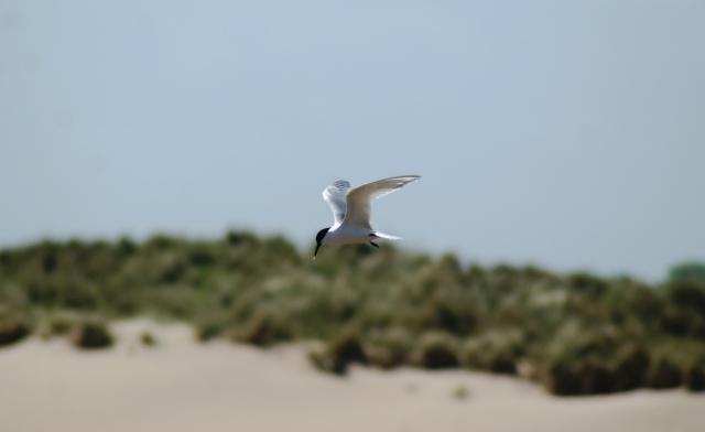 Tern to Stone