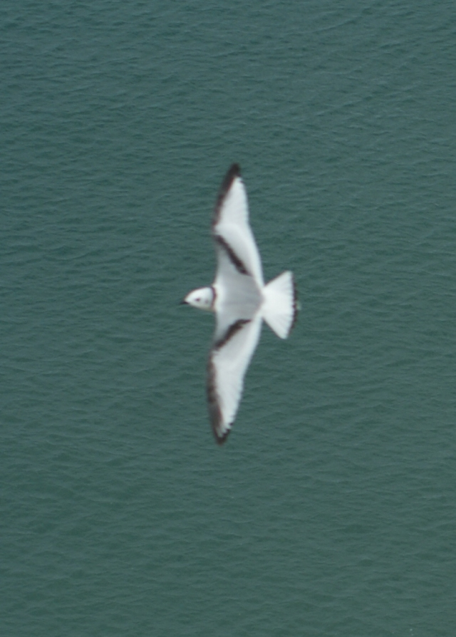 A blurry shot to show the pattern across the wings of a juvenile