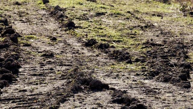 Spot the Linnet Old Moor, Feb 2016