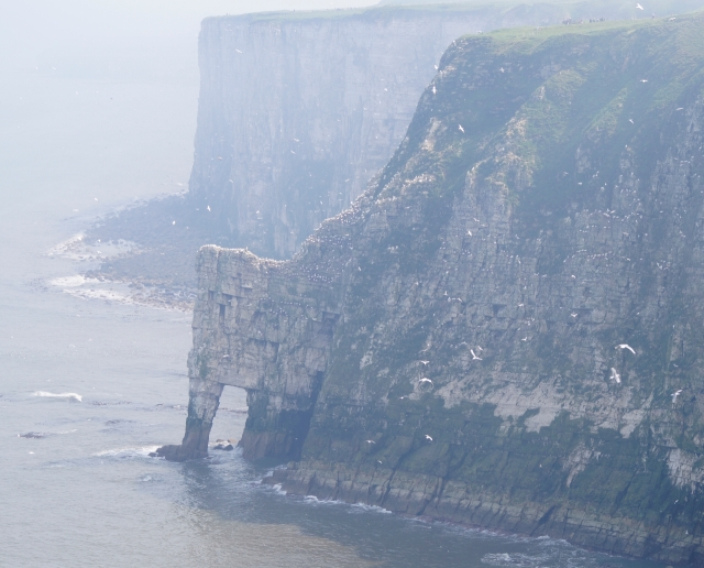 The morening mist over Bempton