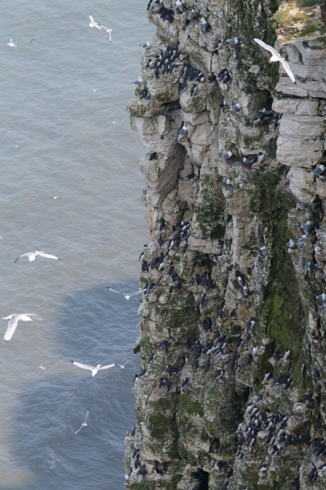 Bempton's high rise des res