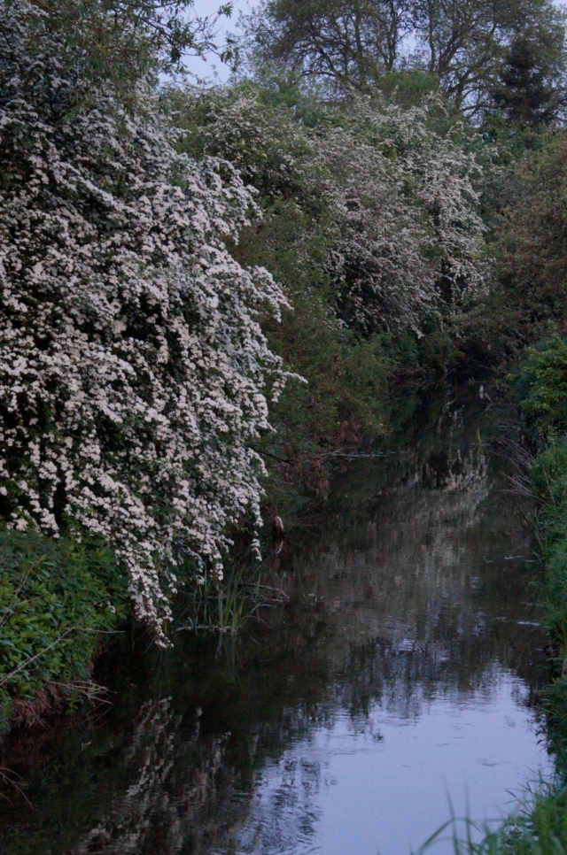 River Foss, New Earswick June 2016