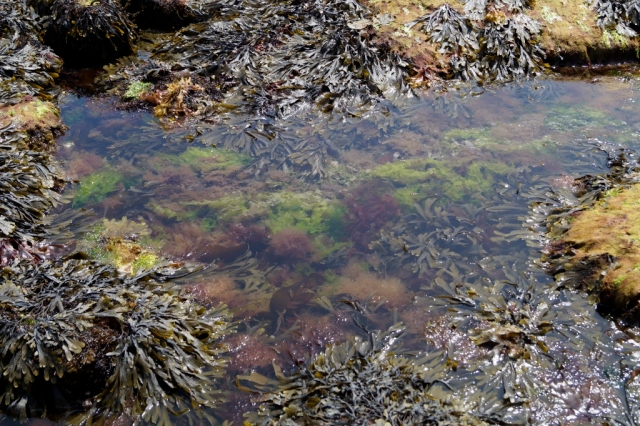 A typical rockpool